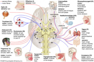 Bệnh đa dây thần kinh do mắc bệnh trầm trọng: Tổng quan và nghiên cứu 133 bệnh nhân hồi sức