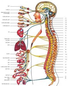 Chấn thương thần kinh ngoại biên