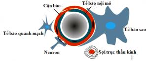 Quan điểm mới: Hoạt tính tự vệ nội sinh, Tính mềm dẻo, Sự tái tạo thần kinh và lý luận trị liệu trong bệnh lý thần kinh